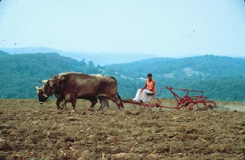agricultur-bio-gita-nagari-copie-1
