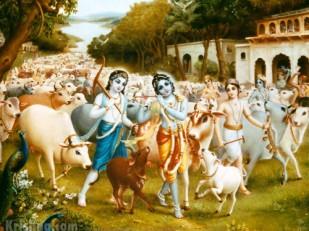 Krishna-Balarama-dans-la-foret-de-Vrindavana