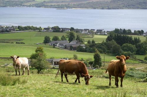 La-terre-et-les-vaches-vraie-richesse.jpg