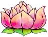 lotus66