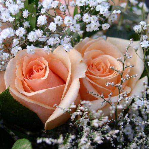 roses-ny.jpg